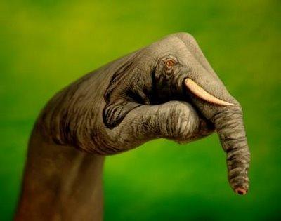 finger-elephant