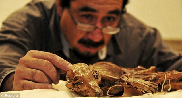 mummified dog (3)