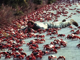 Red Crab Migration (6)