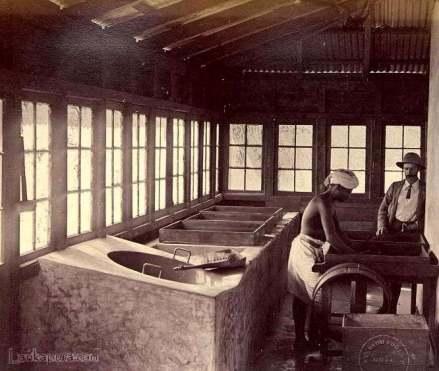 Tea manufacturing, Ceylon 1880