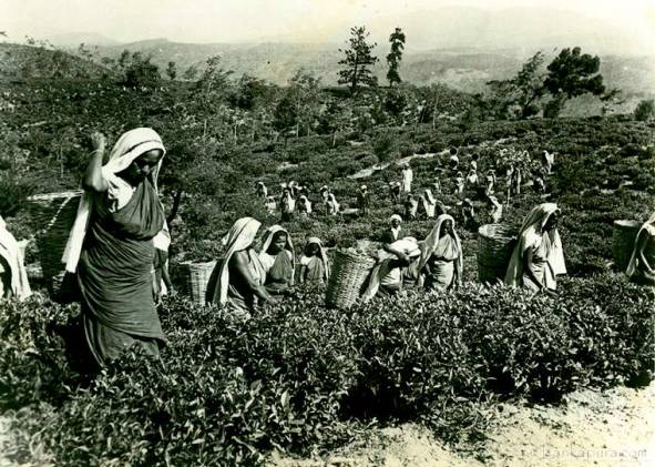 Workers at the Lipton Bandara Eliya Tea Estate, Ceylon