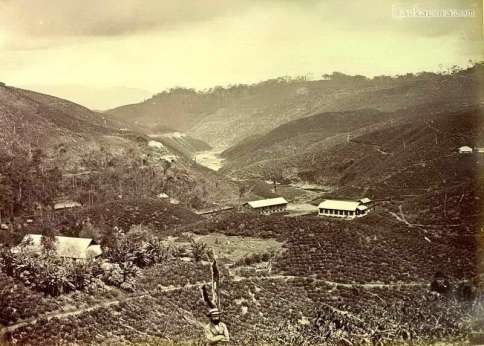 Tea plantations, Ceylon late 1800s