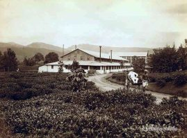 A tea factory Mariawatta Tea Estate, Ceylon