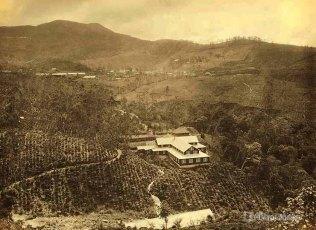 A Ceylon Tea Estate
