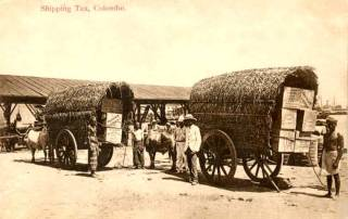 Transport Tea for shipping, Colombo 1912