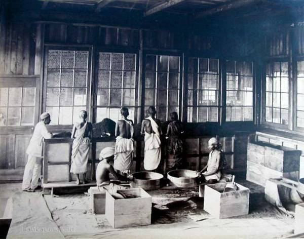 Coolies working in a tea factory 1890