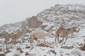 Snow falls on Egypt Pyramids (5)