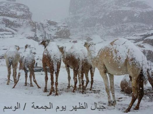 Snow falls on Egypt Pyramids (6)